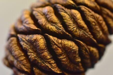 Seeds  cones giant sequoias tree California National Park Banco de Imagens