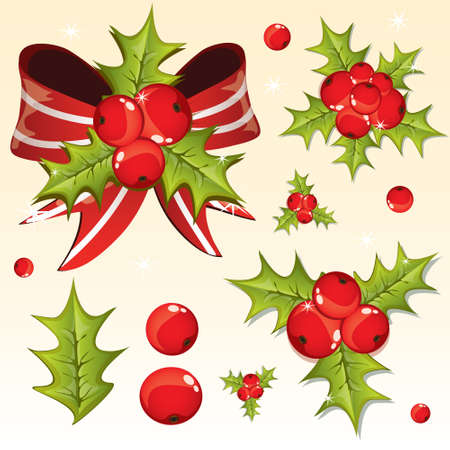 Holly berry design elements  Vector