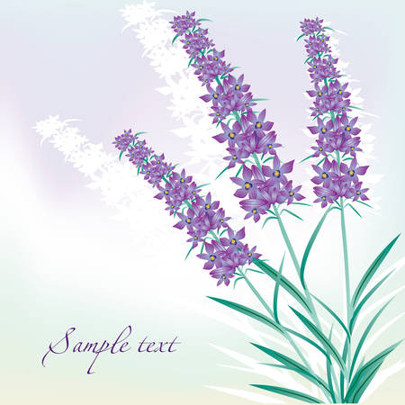 fragrant bouquet: lavender background