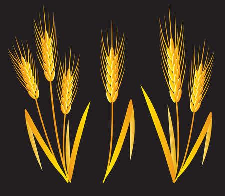 vegetable cartoon: Trigo dorado  Vectores