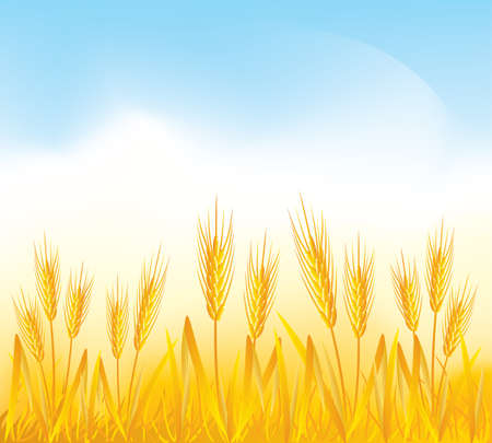 wheat illustration: Wheat field