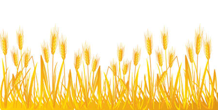 wheat illustration: Grano