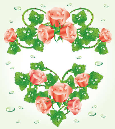 rasp: Rose design elements (vector)