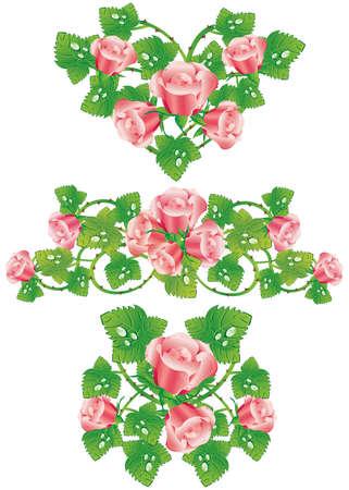 rasp: Pink rose design elements (vector)