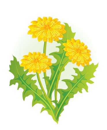 Dandelion  向量圖像