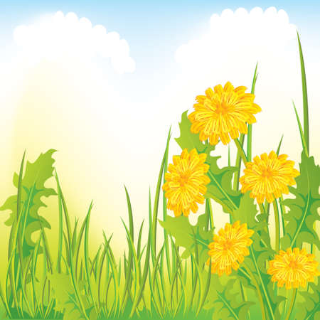 steam of a leaf: Dandelion meadow, illustrated
