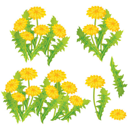 Dandelion design set, vector