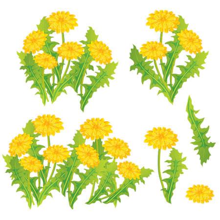 green vegetation: Dandelion design set, vector