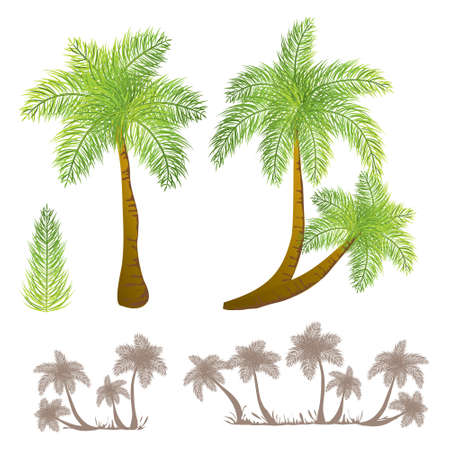 Tropical palm Stock Vector - 9775413