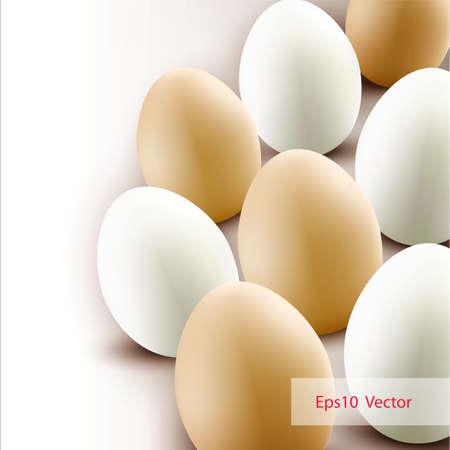 chosen: Chicken eggs background   Vector