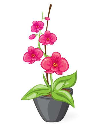 鍋にピンクの蘭  イラスト・ベクター素材