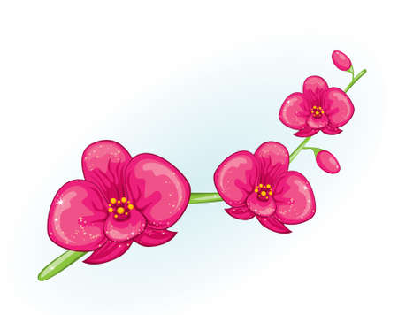 Pink orchid branch Vector