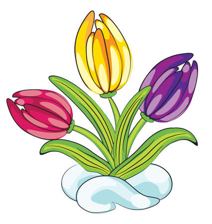 saffron: First flowers
