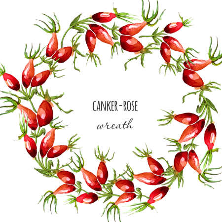 fall harvest: Watercolor hand drawn illustrated canker-rose wreath. Fall harvest border. Red dog rose berries background. Vector