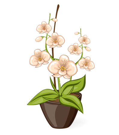 pots: White cartoon phalaenpsis orchid flower in the pot. Vector illustrated isolated blooming ochidea flower.