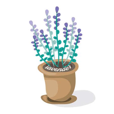 Cartoon lavender in pot. Flat vector illustration.Fragrant violet flowers on white background. Decorative home plant Illustration