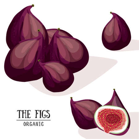 fig: Cartoon organic figs. Vector illustration. Fig isolated on white background
