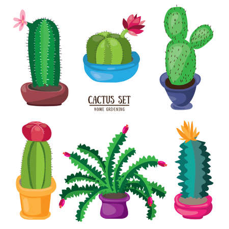 Cartoon cactus desert. Flat vector illustration. Green blooming cactus on white background. Decorative home plant
