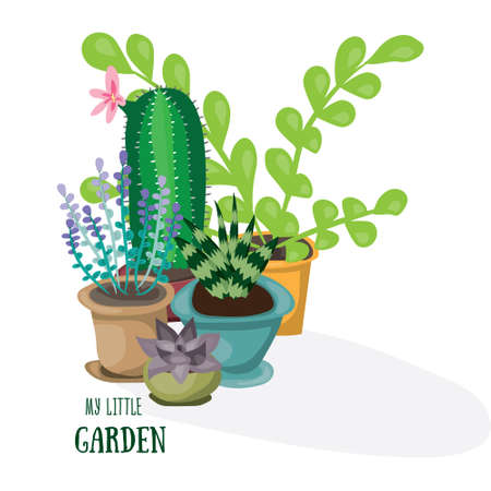 My little garden. Flat vector illustration. Succulent, cactus, lavender nd other green home plants.