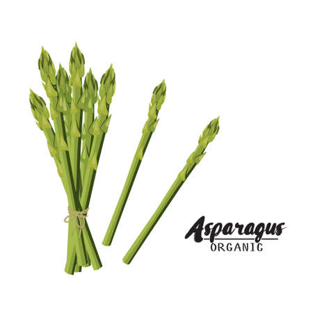 rational: Cartoon asparagus. Ripe green vegetable. Vegetarian delicious. Eco organic food.  Flat vector design, isolated on white background.