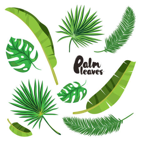 Cartoon tropical palm leaves set. Vector illustrated on white background.  Flat vector hand drawn palm tree elements. Tropical green forest design.