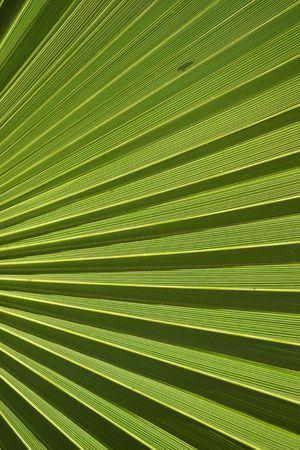 palm frond: Attraverso un Palm Frond