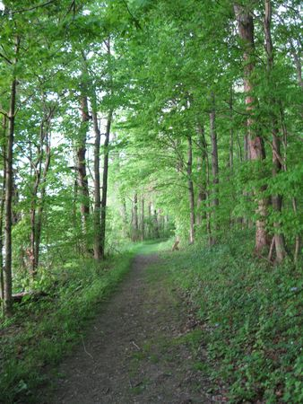 Forest Trail, Spring Valley Wildlife Area Stock Photo - 6123081