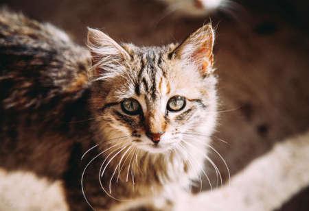 memes: Cute cat phtoto Stock Photo