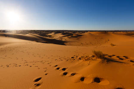 camel caravan taps in the big sand dunes of Erg Chebbi, Morocco, offer an amazing sight of waves and shapes and changing golden, red and orange colors during dusk and sunset