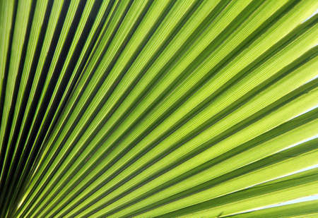 green rays leaf tropical plant in a sunny day
