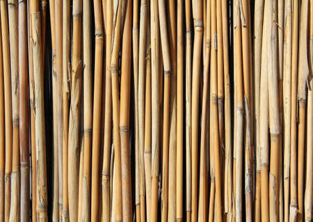 bamboo sticks standing upright and often close