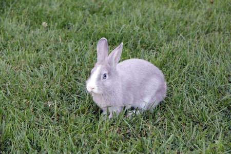 rabbit with blue eyes Stock Photo