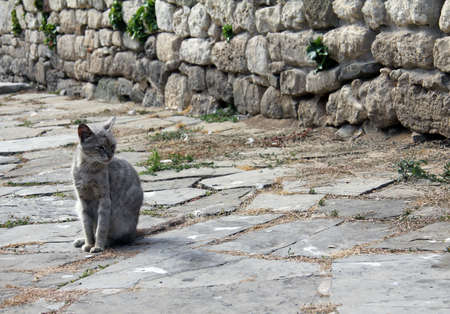 gray cat lives in the old town