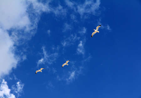 three birds soaring freely in the heavenly height