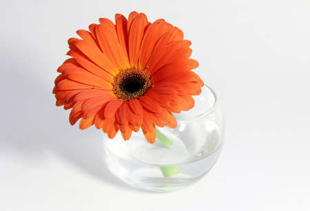 orange flower with many petals in a clear cup of water