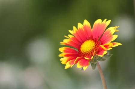 wildflowers are very fond of basking in the sun Stock Photo