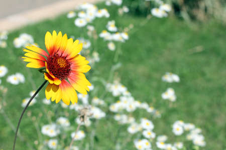 fond: wildflowers are very fond of basking in the sun Stock Photo