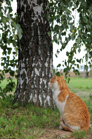cat resting under a tree on the nature