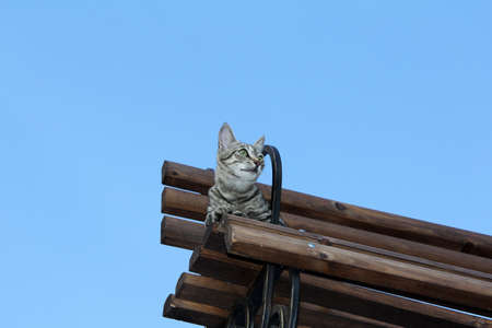 recuperation: Cat resting on a bench on a clear day