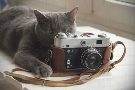 old photograph: background with a cat that takes pictures old camera