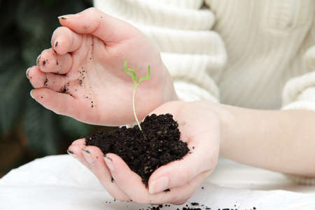 careful: the careful seating arrangements of new seedlings Stock Photo