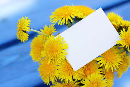 bouquet yellow dandelions card collected in the spring Stock Photo