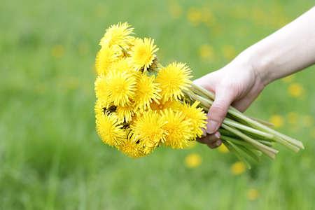 festive bouquet of fresh lush dandelions for mom