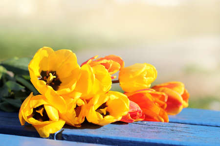 gentle bouquet of tulips lie on a bench in the park  flower meeting Stock Photo