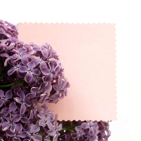 suggestions: lush bunch lilacs on the background of figure form for inscriptions  suggestions spring and flowering