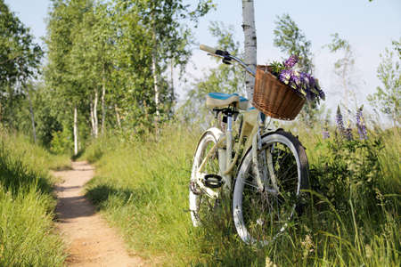 summer landscape with recreational bike and wild flowers in a basket  leisure in nature Stock Photo