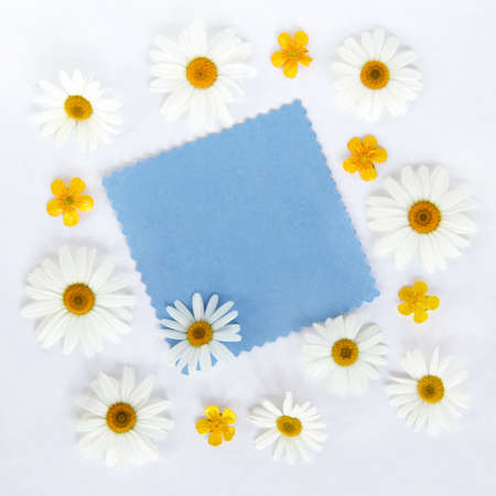 flat lay camomile flowers with blue clean card for inscriptions on a wooden background top view  greeting blank with daisies
