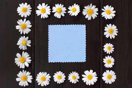flat lay of daisies forming a frame on a dark wooden background with a blue card for inscriptions top view  frame of colors Stock Photo