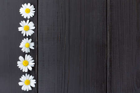 flat lay of the five daisies on a dark wooden background horizontal top view  wooden background with flowers Stock Photo