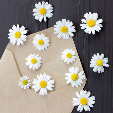 flat lay of the letters fly daisy flowers a top view  message in the form of fireworks flowers